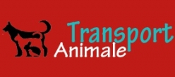 Transport international de animale de companie - probleme si solutii